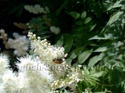 Апрель Шмель на цветке
